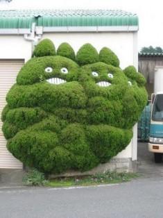 { となりのトトロ } totoro bushes!