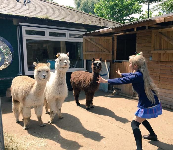 Jurassic park Alpaca •<• #ラブライブ