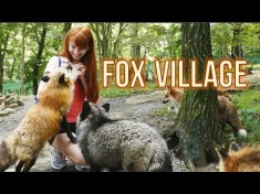 Fox Village in Zao Japan! 蔵王きつね村・kitsune mura – YouTube video