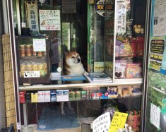 In Japan, You Can Buy Cigarettes from a Shibe Doge | Tokyo Desu