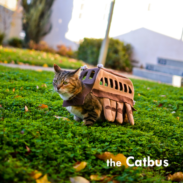 Presenting my cat, Yun Yun as the Catbus! This year's costume is from Miyazaki's animated film M ...