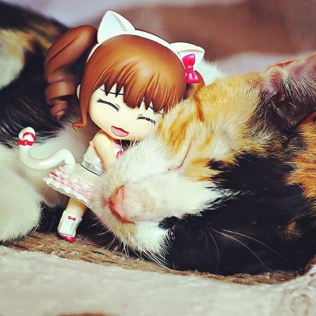 Yukari loves cats!