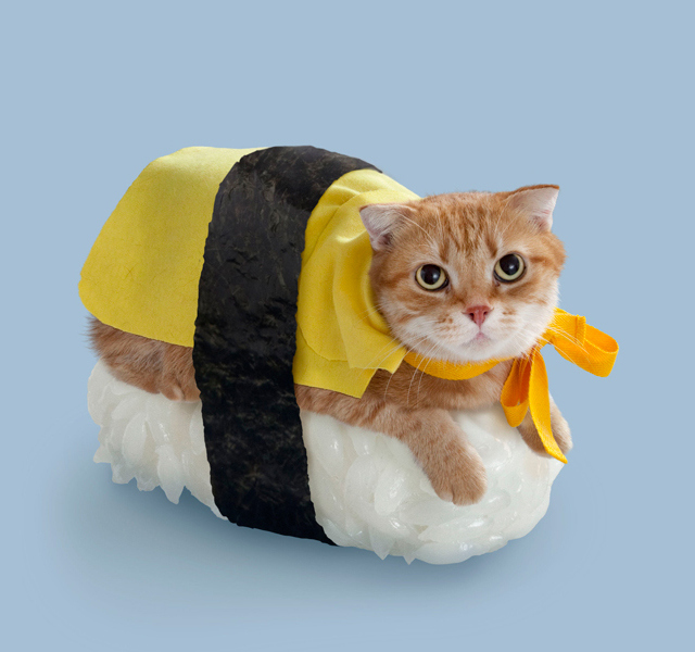 Sushi Cats, A Cute Collection of Magical Felines Resting on Sushi Rice