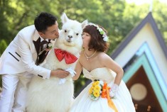 A Tochigi hotel is offering an alpaca for wedding ceremonies!