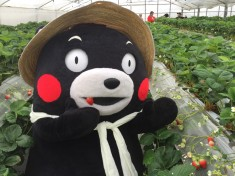 Kumamon is berry berry happy to see you!