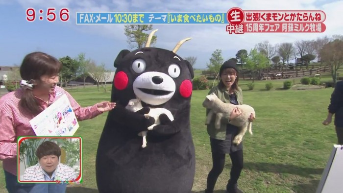 kumamon is a bear in goat's clothing!