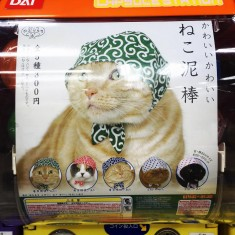 Cat hat gashapon machine spotted in Japan at the Yodobashi-Akiba Megastore ガシャポン