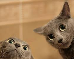 What my cats look like when I get the catnip out… xD