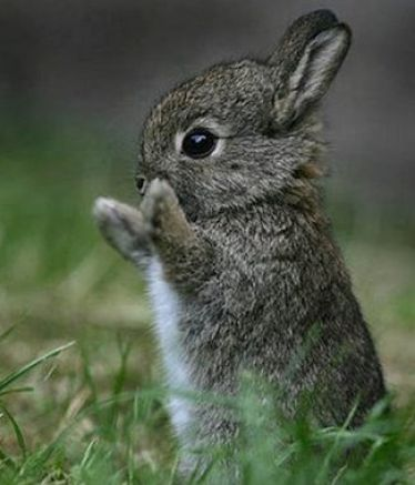 Soooo cute I love bunnies they are even more cute in real life not in a picture! ;)